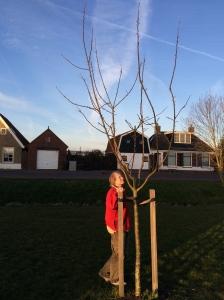 bomen meten, appelboom 1